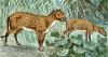 https://imagenes.arrecaballo.es/wp-content/uploads/2014/03/eohippus-o-caballo-del-eoceno.png 661w, https://imagenes.arrecaballo.es/wp-content/uploads/2014/03/eohippus-o-caballo-del-eoceno-300x160.png 300w, https://imagenes.arrecaballo.es/wp-content/uploads/2014/03/eohippus-o-caballo-del-eoceno-100x53.png 100w