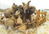 Elefantes de Anibal cruzando el río Ródano. Autor Peter Connoly